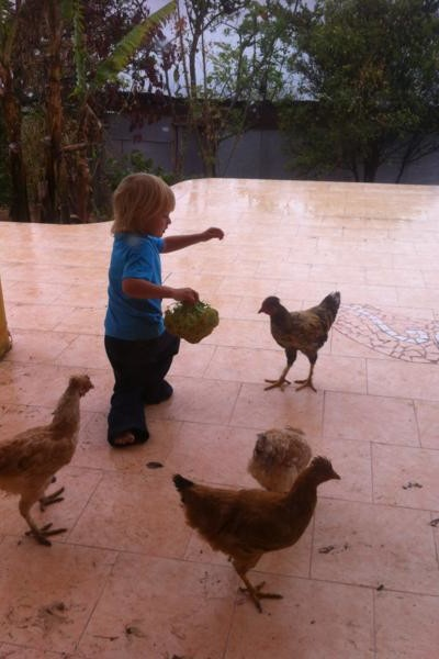 Keeping Backyard Chickens Is Alot Easier Than You Think!