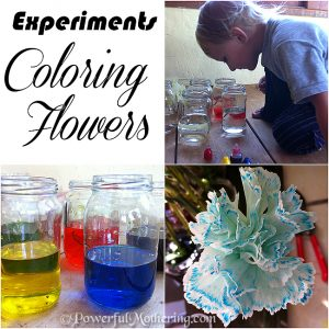 experiments coloring flowers