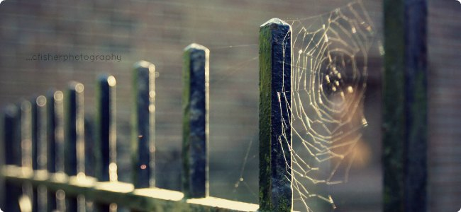 Halloween Fears Scaring the Boo Out of Our Children webs