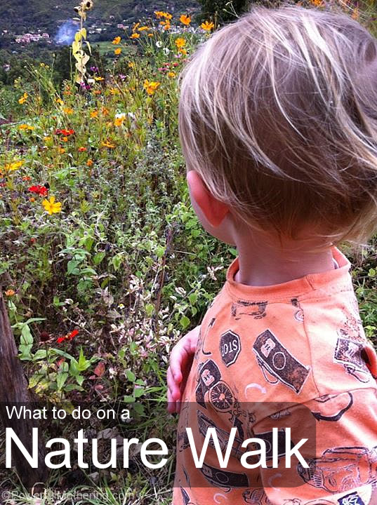 what to do on a nature walk