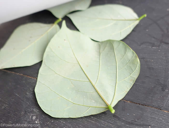 large leaf leaves