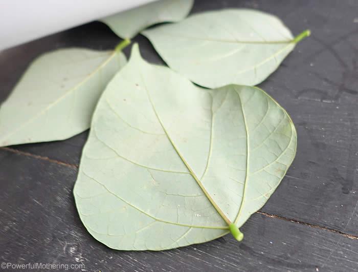 large leaf leaves