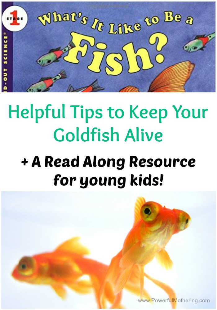 Helpful tips to keep your goldfish alive + a read along resource!
