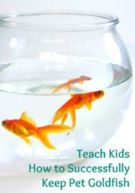 Tips for Successfully Keeping Goldfish
