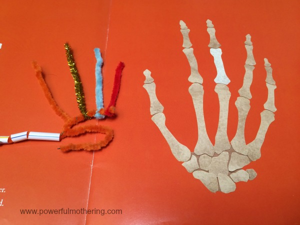 hand outline pipe cleaners