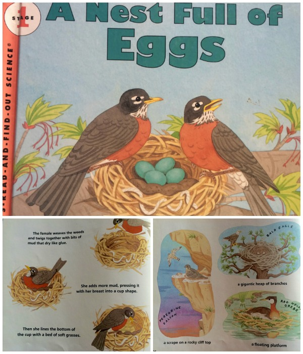 A nest full of eggs collage