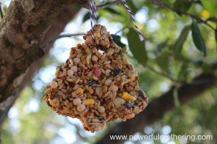 bird seed ornament activity idea
