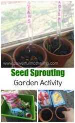 Sprouting Seeds Activity