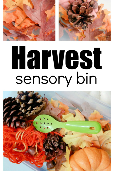 How To Make A Fall Harvest Sensory Bin