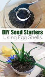 How to Make Eggshell Seed Starters