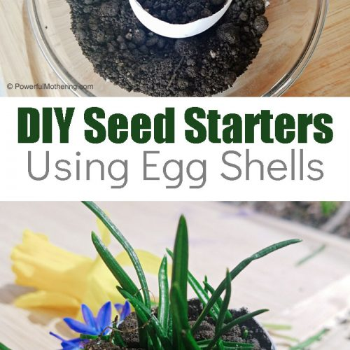 Are you thinking of starting a garden? This is a simple way with a DIY Seed Starter that you and your kids can make with supplies you may already have.
