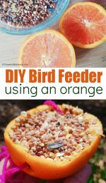 Easy Orange Peel Bird Feeder Craft