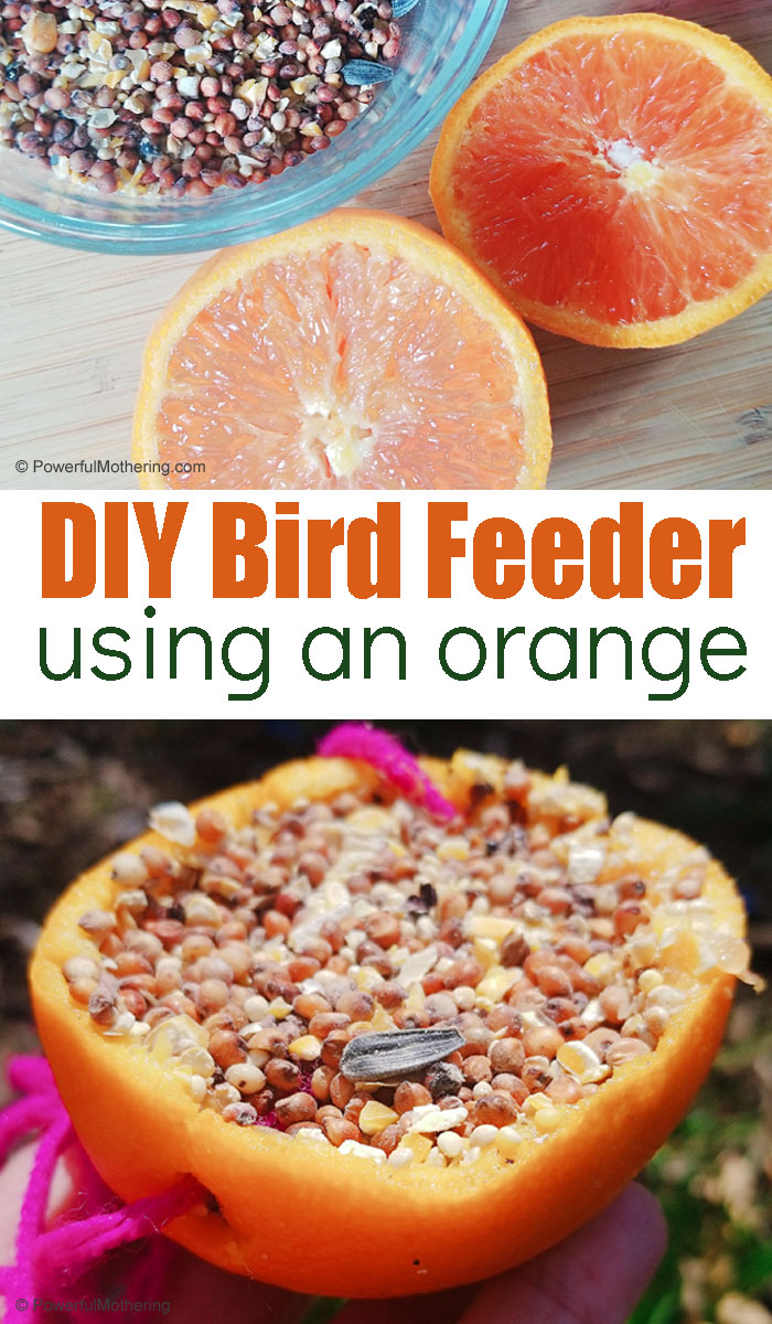 Create a pretty and easy natural bird feeder with an orange peel. Birds will love it and kids will enjoy making it so much!