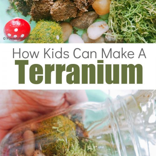 Help Kids Build A Terrarium