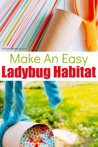 Easily create a Ladybug Habitat with common supplies that you probably have at home! This is a fantastic STEAM activity for children this summer!