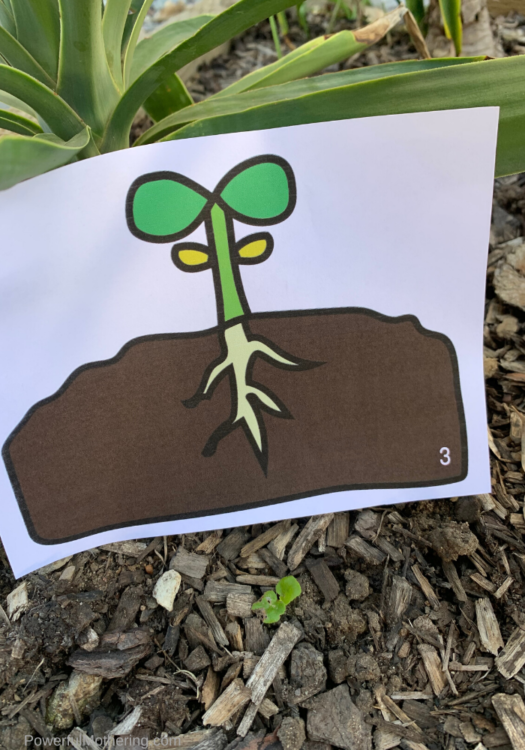 This printable activity is the perfect way to get your kids outside for learning. Help your kids understand about the life cycle of the seeds in their garden with a fun, engaging scavenger hunt.