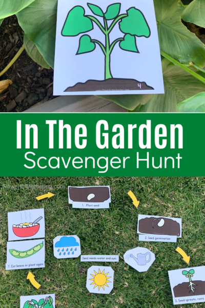 This printable activity is the perfect way to get your kids outside for learning. Help your kids understand about the life cycle of the seeds in their garden with a fun, engaging scavenger hunt. #freeprintables #outdooractivities #seedlifecycle